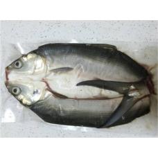 七股純海水生態養殖無刺虱目魚